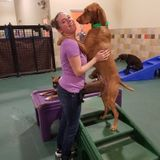Dog Walker, Pet Sitter in Astoria