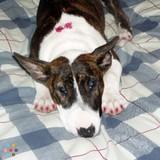 Dog Walker, Pet Sitter in New Lenox