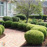 Pro Landscape Maintenance