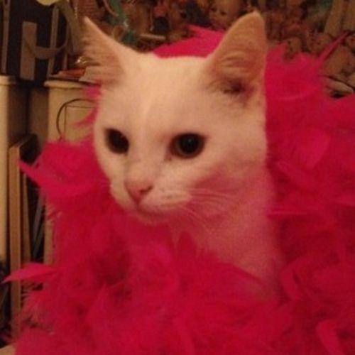 Pet Care Provider Victoria McAllister Gallery Image 1