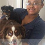 Dog Walker, Pet Sitter in Herndon
