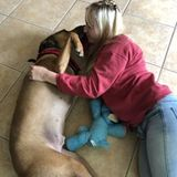 Katy Pet Service Provider Seeking Job Opportunities