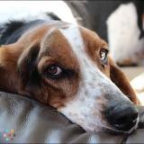 Dog Walker, Pet Sitter in Nipawin
