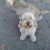 Dog Walker, Pet Sitter in Perris