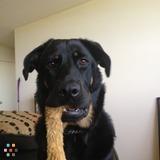 Dog Walker, Pet Sitter in Mississauga