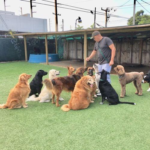 Pet Care Provider Wilberg H's Profile Picture