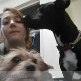 Dog Walker, Pet Sitter in New Westminster
