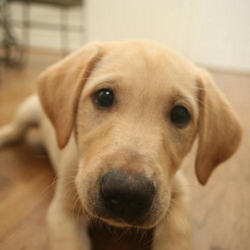 Pet Care Provider Tom H's Profile Picture