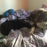 Dog and cat pet caregiver and sitter.