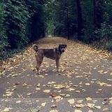 Reliable and experienced dog walker and pet sitter