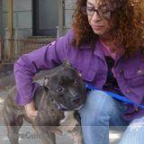 Dog Walker, Pet Sitter in Brooklyn