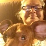 Wagoner Dog Sitting Professional Seeking Work in Oklahoma