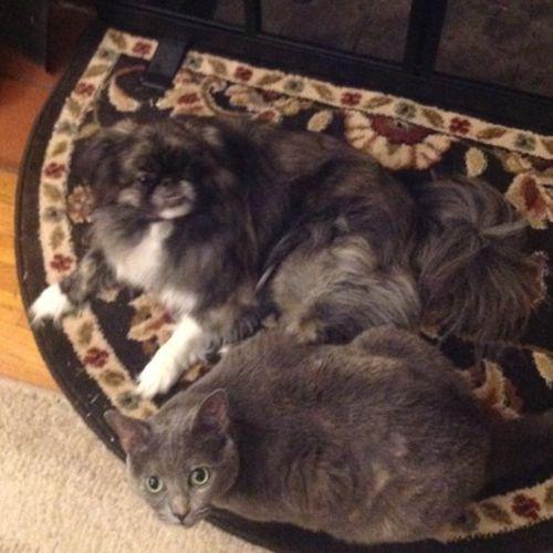 Pet Care Provider Denise M Gallery Image 2