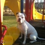 Dog Walker, Pet Sitter in Reston