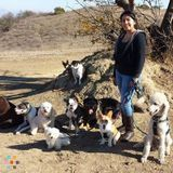 Dog Walker, Pet Sitter in Burbank