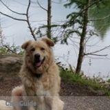 Dog Walker, Pet Sitter in Sechelt