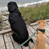 Experienced pet owner in Bowmanville ready to care for your critters of all shapes and sizes !