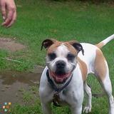 Dog Walker in Hingham