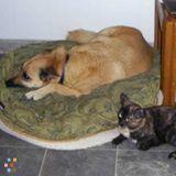 Dog Walker, Pet Sitter in Sierra Vista