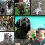 Dog Walker, Pet Sitter in Holly
