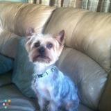 Dog Walker, Pet Sitter in Keyport