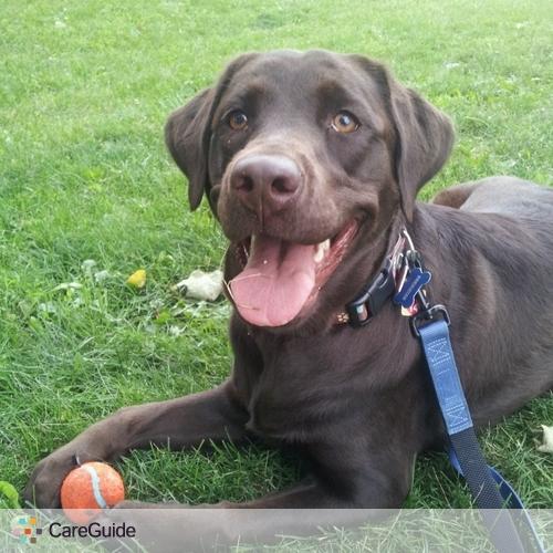 Pet Care Provider Karen P's Profile Picture