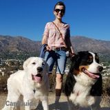 Dog Walker, Pet Sitter in Sunland