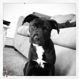 Dog Walker Job in Saratoga Springs