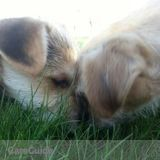 Dog Walker, Pet Sitter in Dolliver