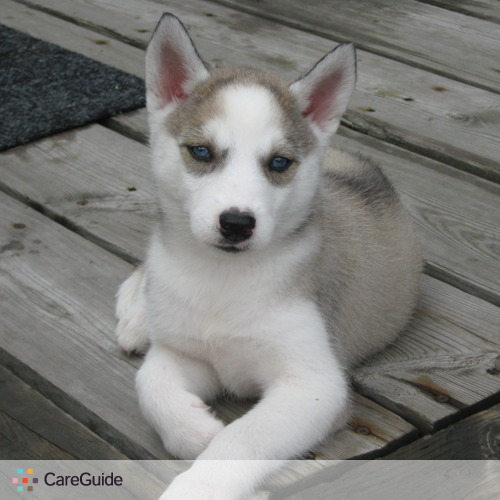 Pet Care Provider Jaidin Buchanan's Profile Picture