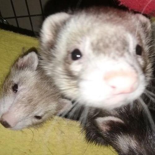 Pet Care Provider Susan B Gallery Image 2