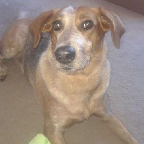 Pet Care Provider Cheyenne C Gallery Image 1