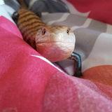 Exotic animal/regular pet sitter