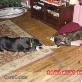 Dog Walker Job, Pet Sitter Job in Bloomsburg