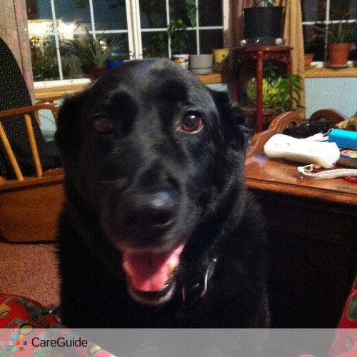 Pet Care Provider Tracie P's Profile Picture