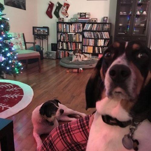 Pet Care Provider Amanda Ortiz Gallery Image 3