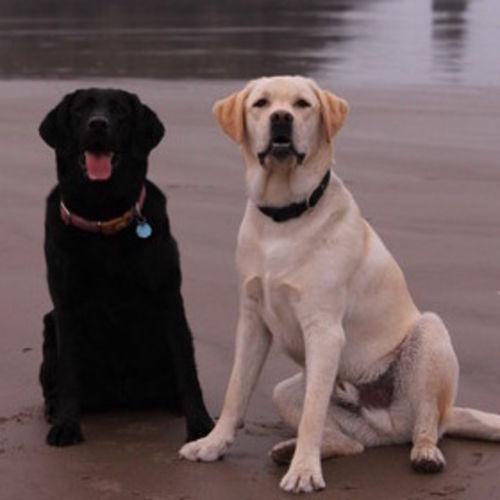 Pet Care Job Kara Condon's Profile Picture