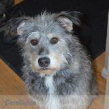 Dog Walker, Pet Sitter in Rockyford