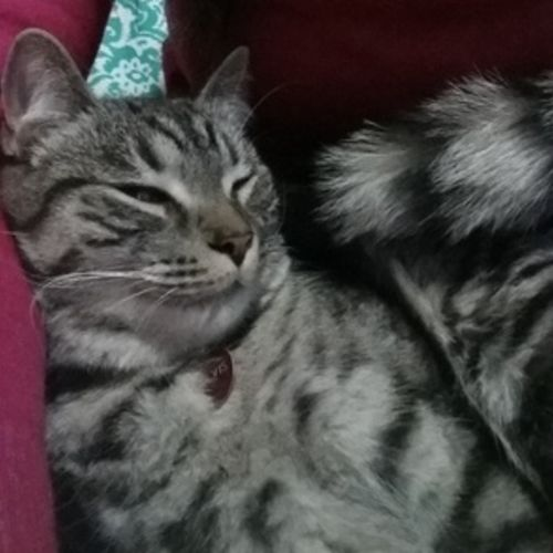 Pet Care Provider Cristiane C Gallery Image 1