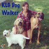 Dog Walker, Pet Sitter, Kennel in Schaumburg