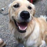 Nanaimo, British Columbia Dog Sitter