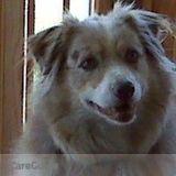 Dog Walker, Pet Sitter in Lilburn