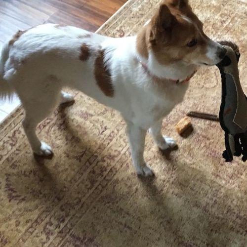 Pet Care Job Scott Menzel's Profile Picture