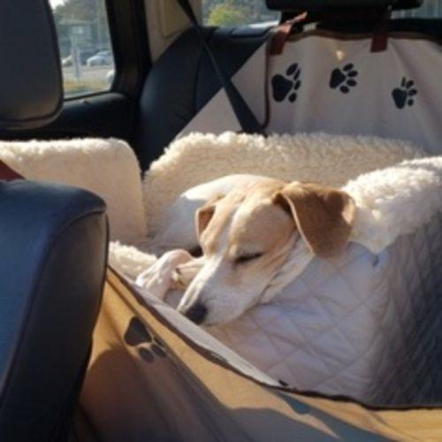Pet Care Provider Alisha Z Gallery Image 3