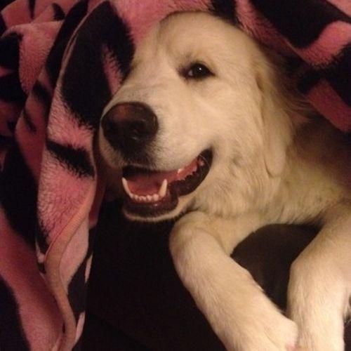 Pet Care Provider Tamzen D Gallery Image 1