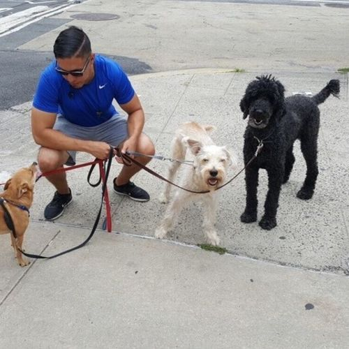 Pet Care Provider Kristian M Gallery Image 3