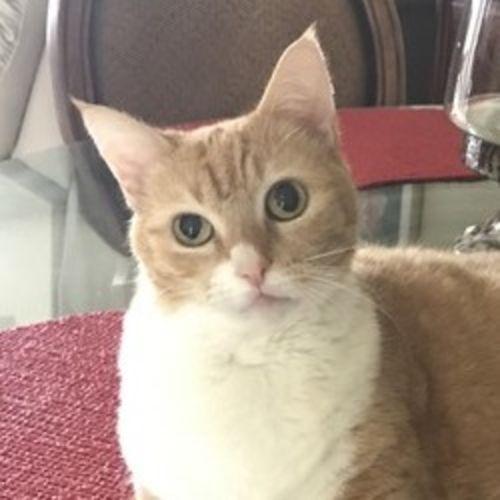 Pet Care Provider Debra P's Profile Picture