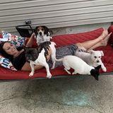 Available: Seasoned Dog Walker in Tonawanda