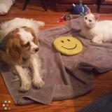 Dog Walker, Pet Sitter in North Arlington