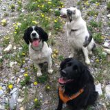 For Hire: Pet Service Provider in Kamloops, British Columbia